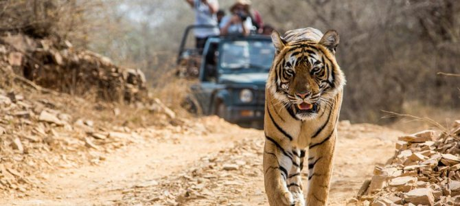 The Best Wildlife Sanctuaries in India | Cheap Flights To India
