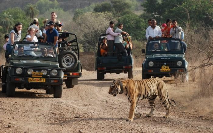 jeep safari Travel Wide Flights