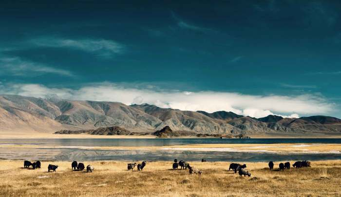 mongolia travel wide flights