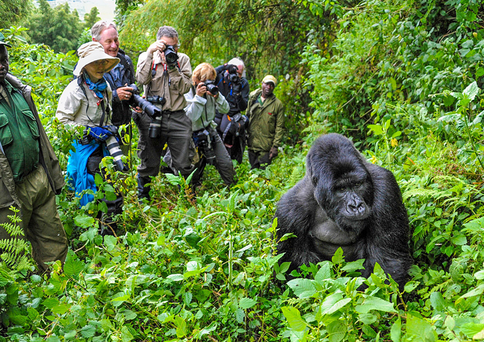 Virunga National Park Congo, Safari , safari guide in Congo, things to do in Congo, National Park ,cheap flights to Congo, direct flights to Congo, last minute flights to Congo, cheap travel, flights to Congo, direct flights, Kilimanjaro, things to do in Congo, flight deal 2018, last minute flights to Congo, Congo travel guide, things to do in Congo, Congo tour, Congo hd images, Congo tourism, direct flights to Congo,Etosha National Park Congo, top safari in congo, top safari in africa, top safari in africa, top parks in africa, best places to visit in africa 2018, africa travel guide, travel wide flights, travelwideflights