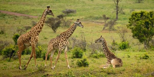 kisumu Travel Attractions | Kisumu Travel Guide