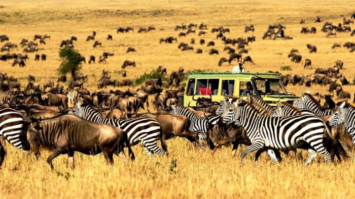 Safari , safari guide in Kilimanjaro, things to do in Kilimanjaro, National Park ,cheap flights to Kilimanjaro, direct flights to Kilimanjaro, last minute flights to Kilimanjaro, cheap travel, flights to Kilimanjaro, direct flights, Kilimanjaro, things to do in Kilimanjaro, flight deal 2019, last minute flights to Kilimanjaro, Kilimanjaro travel guide, things to do in Kilimanjaro, Kilimanjaro tour, Kilimanjaro hd images, Kilimanjaro tourism, direct flights to Kilimanjaro,Etosha National Park Kilimanjaro, top safari in Kilimanjaro, top safari in Kilimanjaro, top safari in Kilimanjaro, top parks in Kilimanjaro, best places to visit in Kilimanjaro 2019, Kilimanjaro travel guide, travel wide flights, travelwideflights