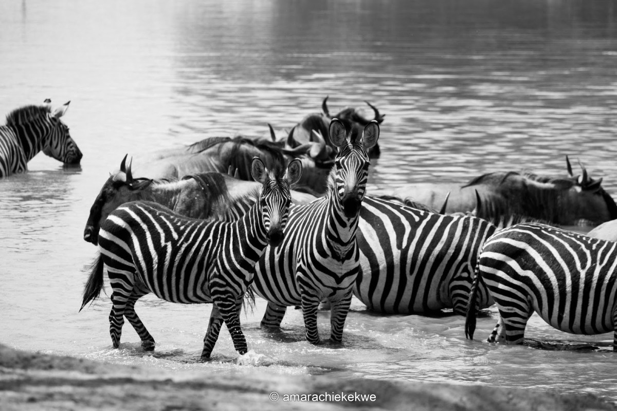 Safari and Zanzibar Tour Diaries - First Week Recap