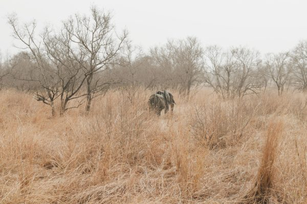 Pendjari Elephant