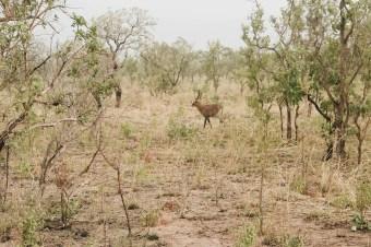 Pendjari Safari
