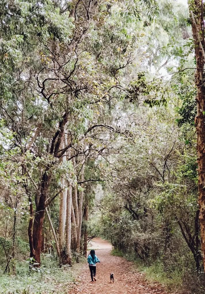 Karura Forest Path