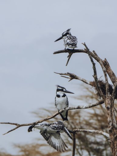Lake Naivasha Birds