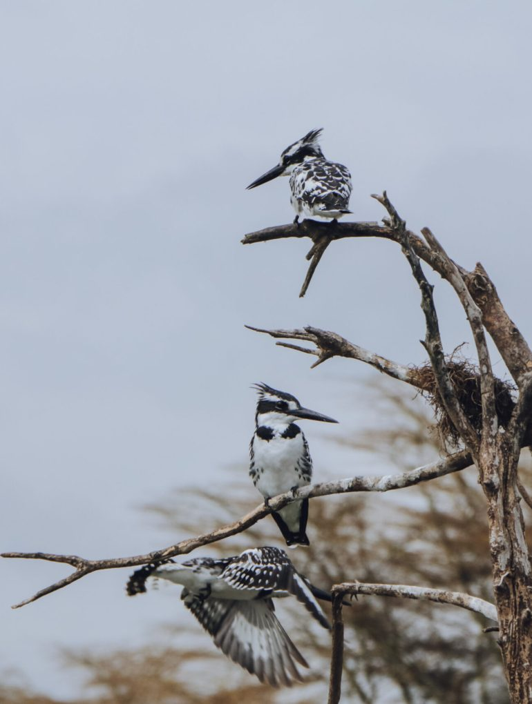 Lake Naivasha Birds