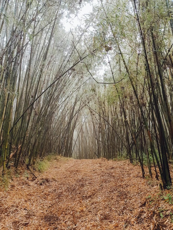 Bamboo Gate Elephant Hill