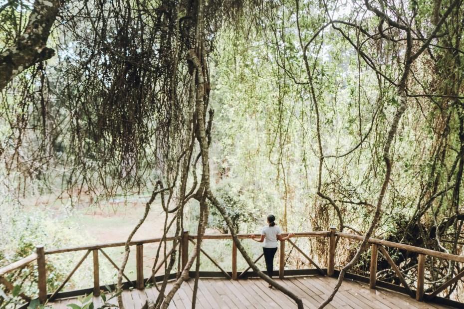 Canopy Walkway Ngare Ndare
