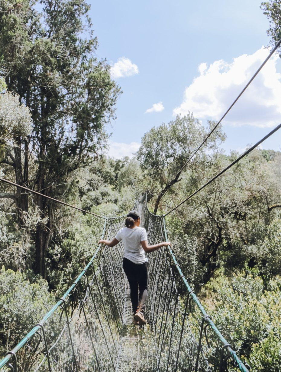 Canopy Walkway at Ngare Ndare Forest