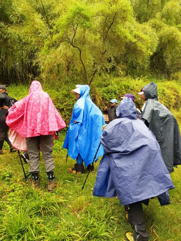 Elephant Hill Rainy Trail