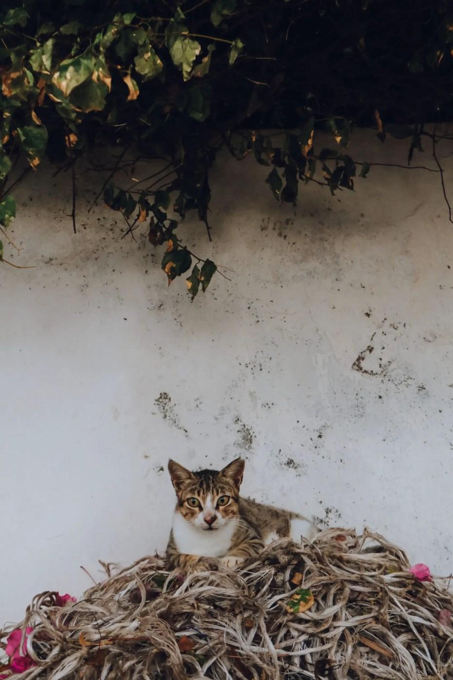 Cat on Lamu Island
