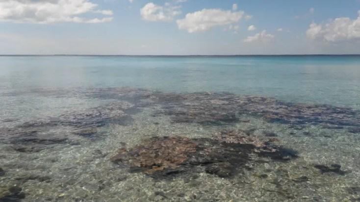 Corals at Punta Perdiz in Playa Giron