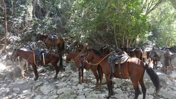 Horses at Salto del Caburni