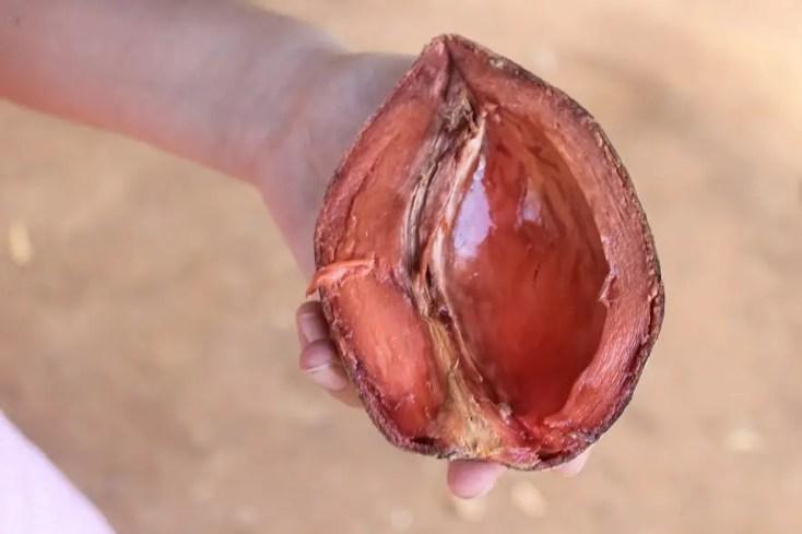 Fructul național al Cubei, mamey