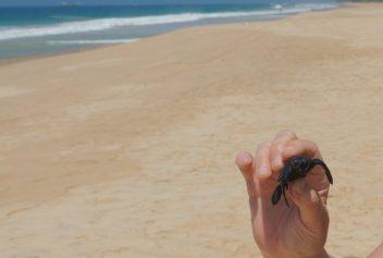 Galle, Zeeschildpad, Turtle Hatcheries