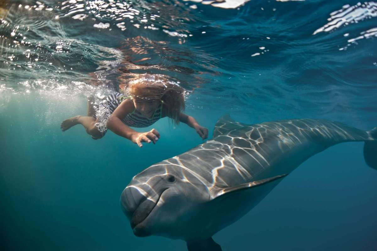 How to swim with wild dolphins in Australia