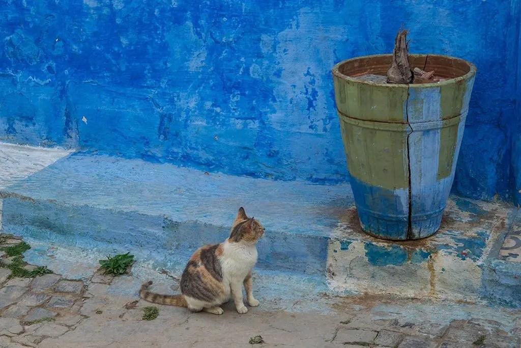 gatto nella Kasbah degli Oudaia