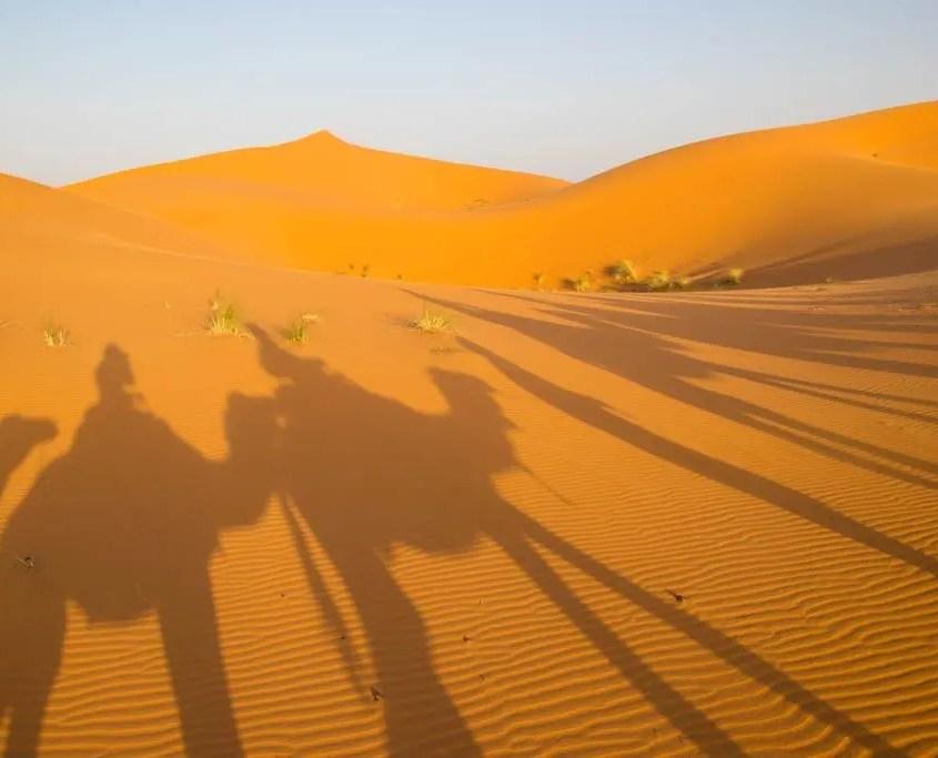 ombre dromedari deserto del Marocco
