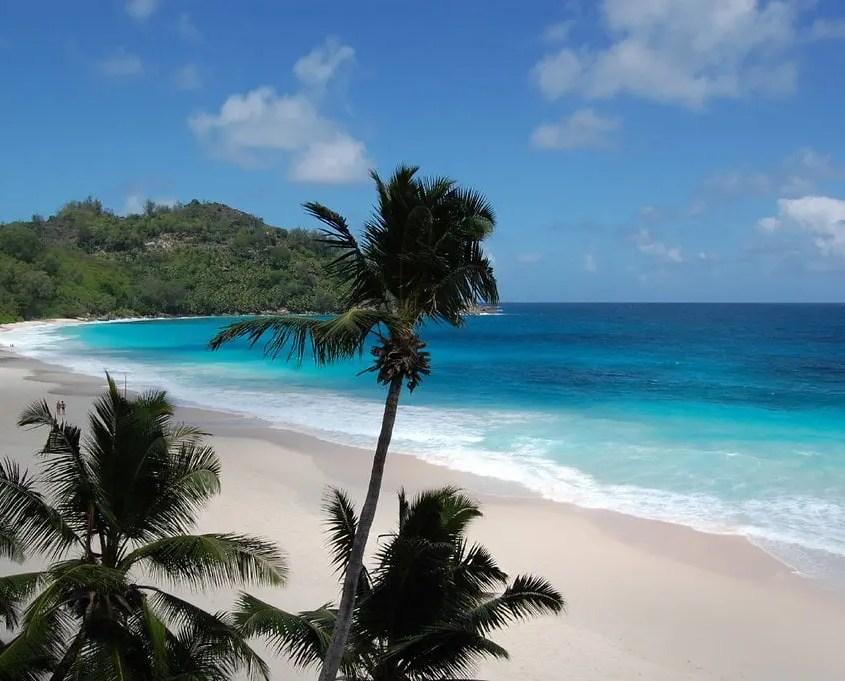 palme spiaggia seychelles