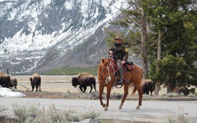 ranger Yellowstone