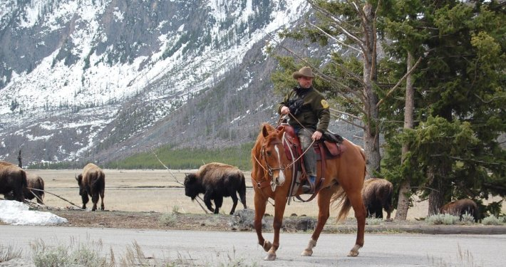 ranger Yellowstone