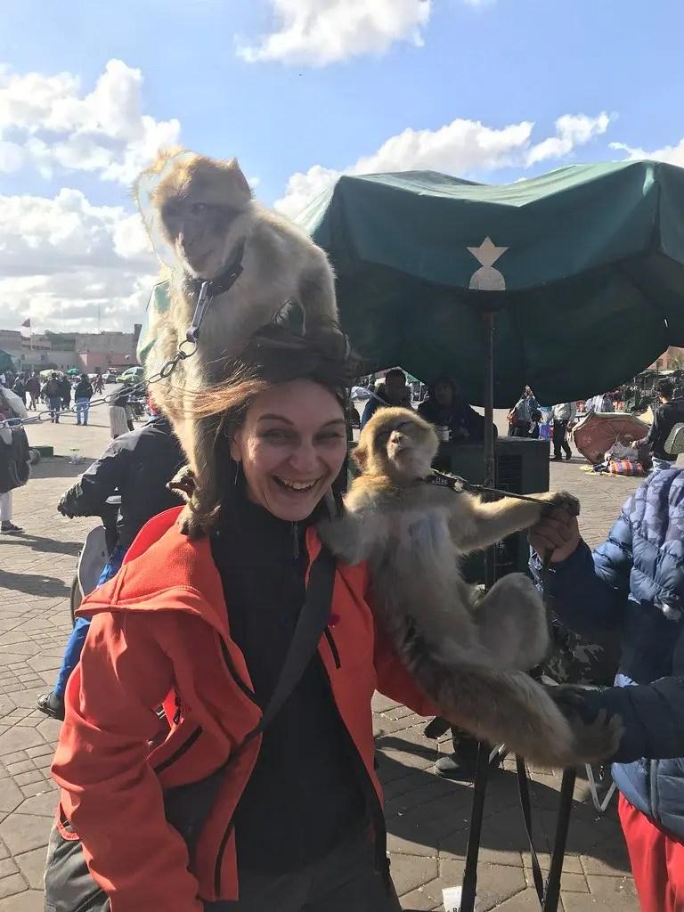 scimmie nella piazza principale di Marrakech: Jamaa El Fna