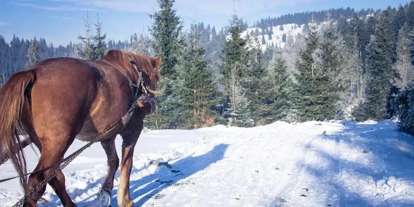Slitta trainata dai cavalli in Val Pusteria