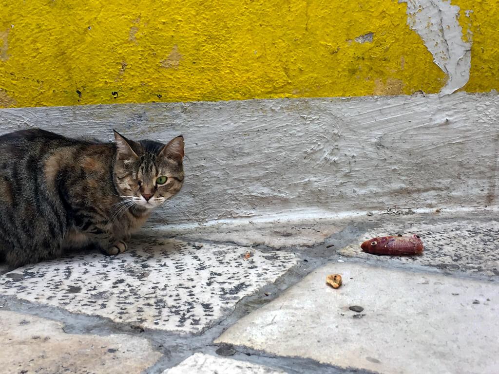 Croatian One-Eyed Cat & Dinner