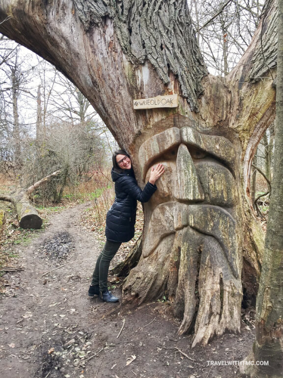 Wise Old Oak Tree on the Health Valley Trail