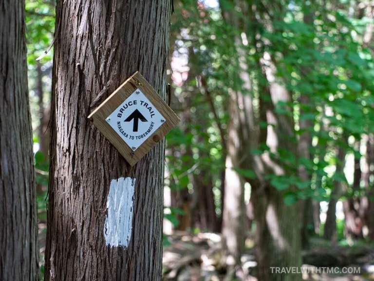 Bruce Trail Tree Marking at Inglis Falls