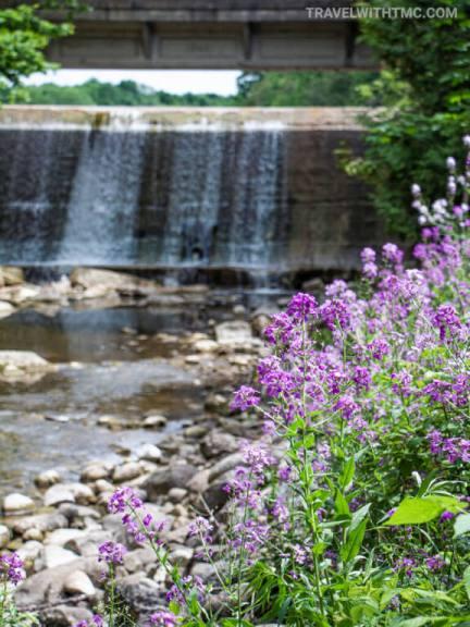 Holstein Dam Flowers in Grey County Ontario
