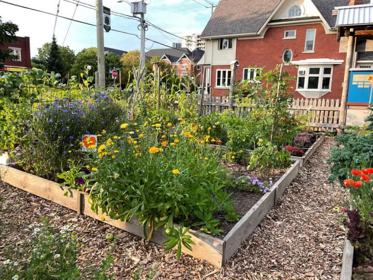 Community Garden Plots in DTK