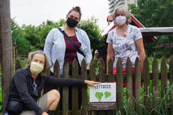 Queen's Green Community Garden Lettuce Crew