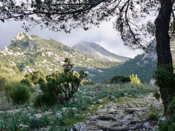 Wandern in der Serra-Tramuntana: Nahe dem Coll de Sa Basola