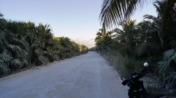 A single dirt road that is 50 km long leads to Punta Allen.