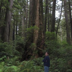 "An average redwood compared to me (I'm 5'11"")"