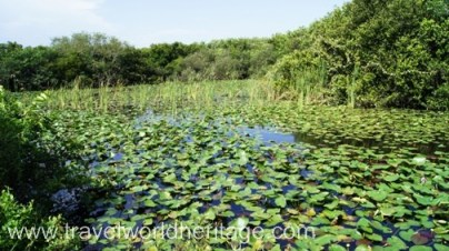 On the Shark Valley trail of the Everglades National Park.