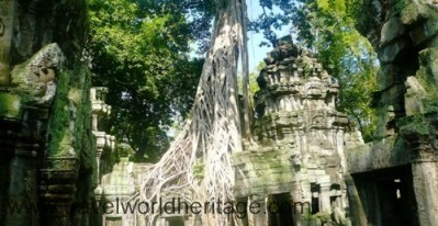 Ta Prohm, truly the best temple in Angkor.