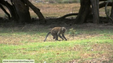 This guy just finished a huge fight with two other monkeys.