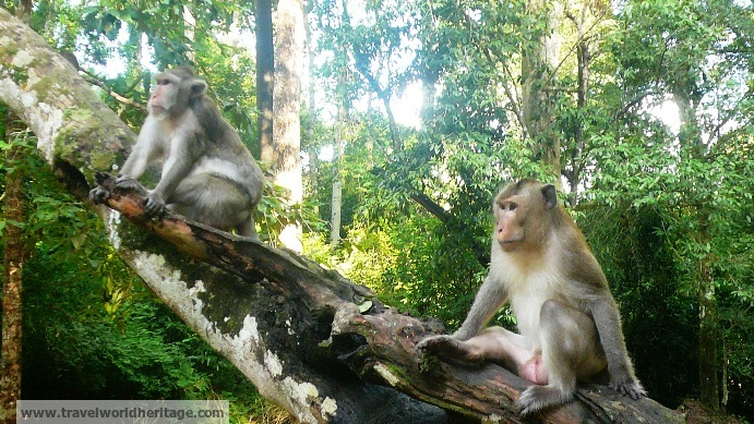 Preah Khan Monkeys