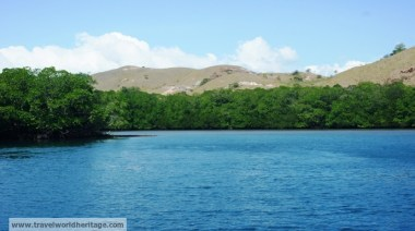 Mangroves along Rinca Island.