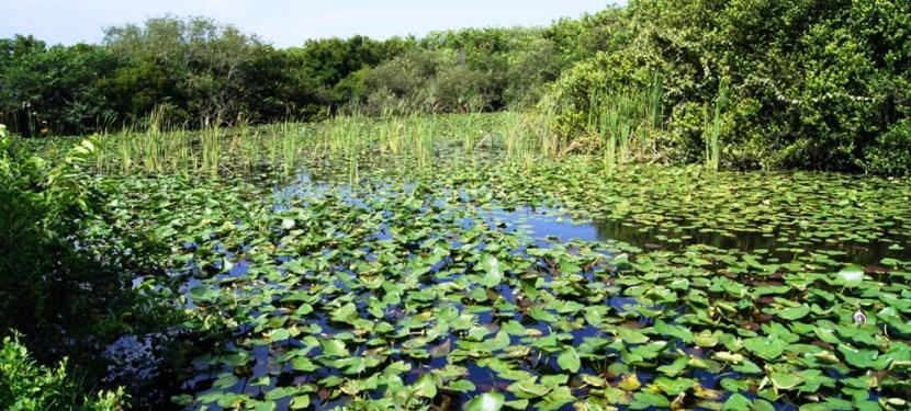UNESCO Monday #3: The Everglades