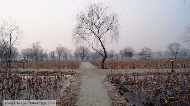 Gungnamji Pond Eerie tree