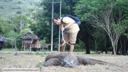 I tempt fate by poking a venomous Komodo Dragon.
