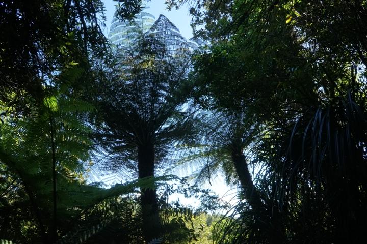 Ferns in Hunua Ranges