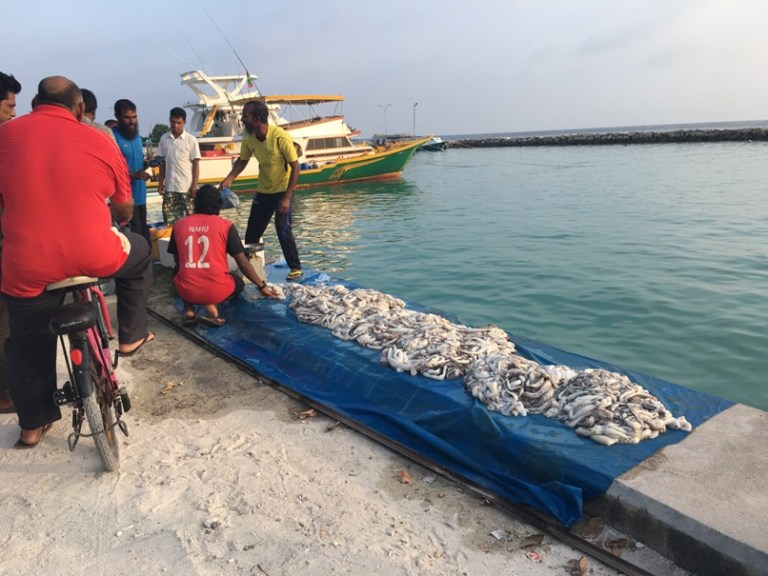 The weekly Octopus Market in Mahibadhoo