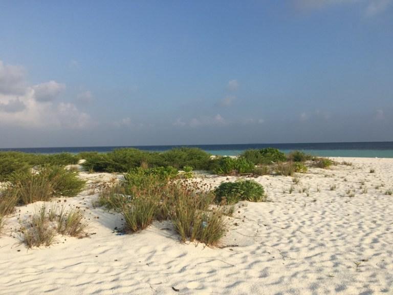 The deserted island of Alicoi.