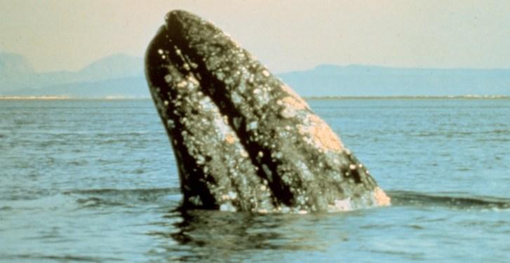 10 Amazing Animal Encounters Around the World